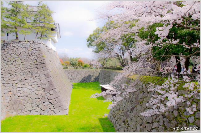 名古屋城 桜 イラスト風